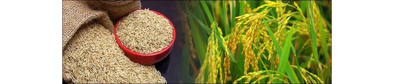 Agam Rice